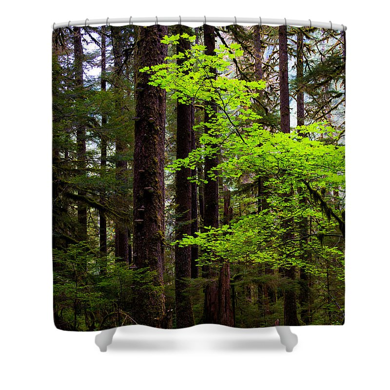 Olympic National Park Shower Curtains