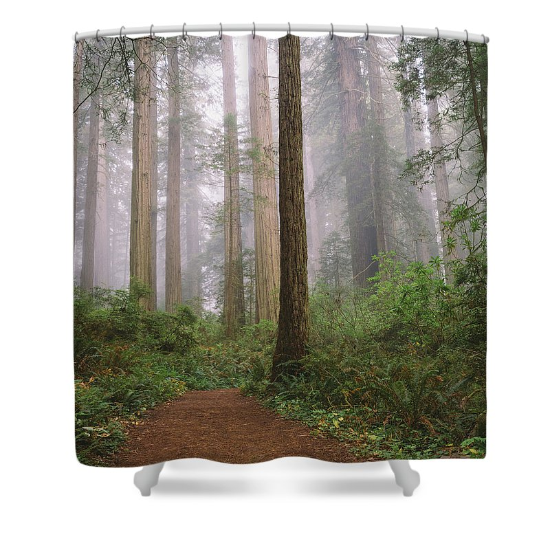 Tranquility Shower Curtain featuring the photograph Hiking Through Californias Redwoods by David Hoefler