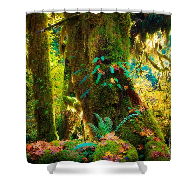 America Shower Curtain featuring the photograph Hoh Grove by Inge Johnsson