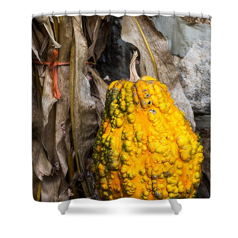 Gourd Shower Curtain featuring the photograph Holiday Gourd by David Kay