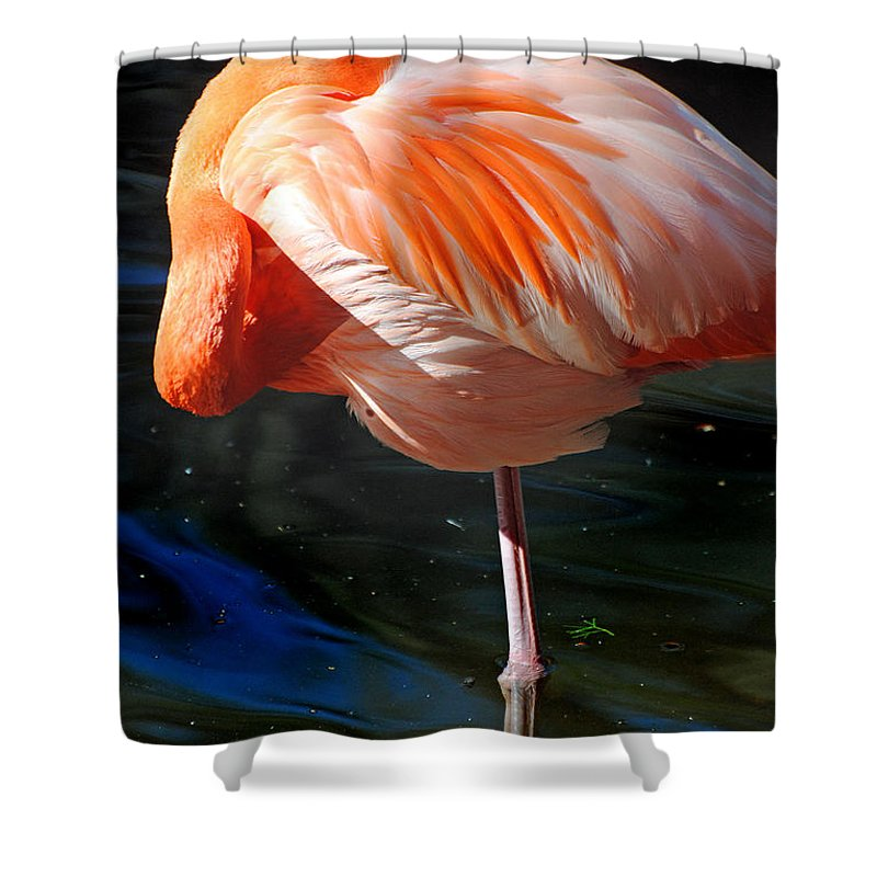 Homosassa Springs State Park Shower Curtain featuring the photograph Homosassa Springs Flamingos 7 by Jeff Brunton