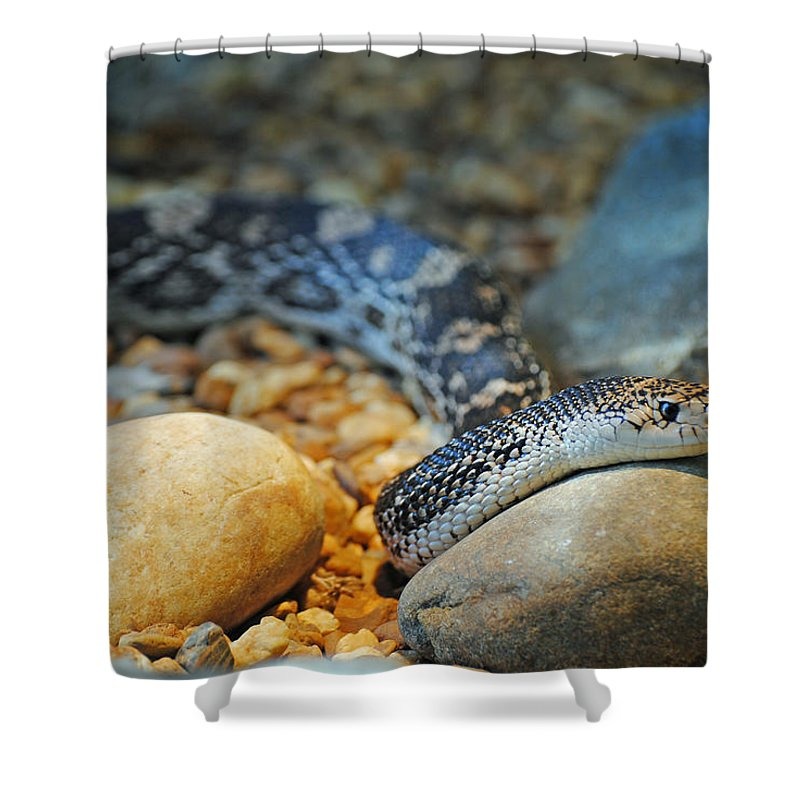 Homosassa Springs Shower Curtain featuring the photograph Homosassa Springs Snake by Jeff Brunton