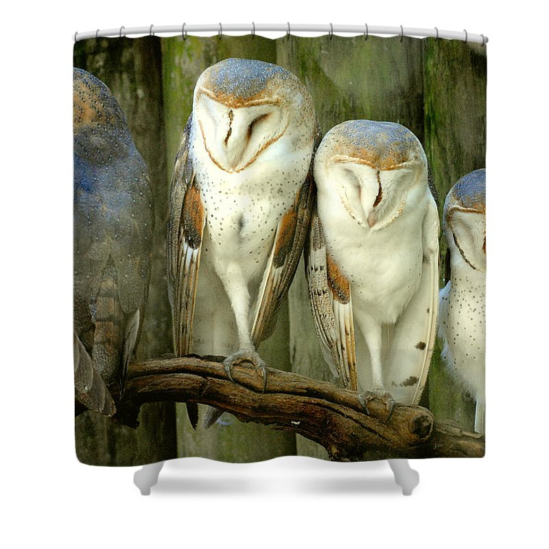 Homosassa Springs State Park Shower Curtain featuring the photograph Homosassa Springs Snowy Owls 2 by Jeff Brunton