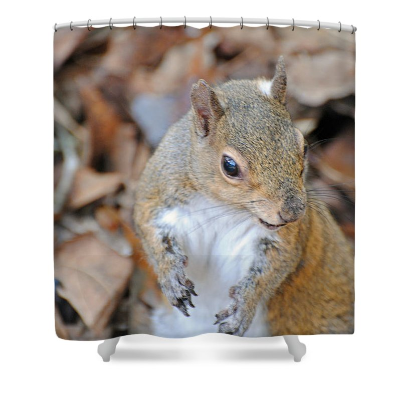 Homosassa Springs Shower Curtain featuring the photograph Homosassa Springs Squirrel 2 by Jeff Brunton