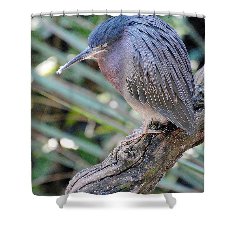 Homosassa Springs Shower Curtain featuring the photograph Homosassa Springs Waterfowl 10 by Jeff Brunton