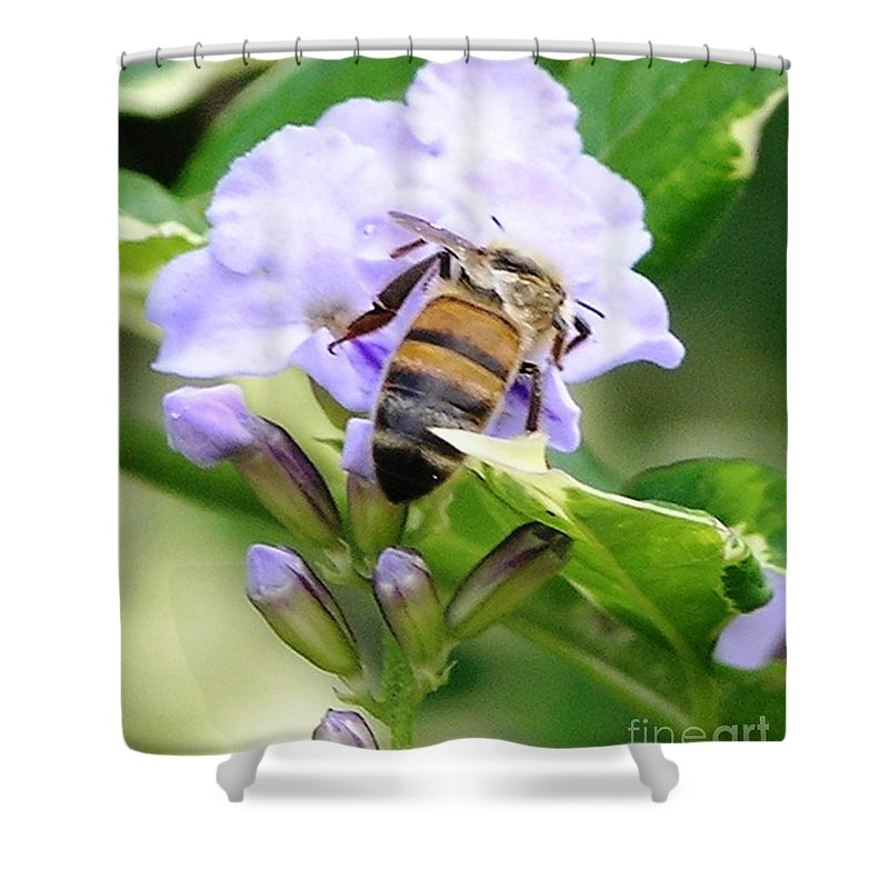 Purple Flower Shower Curtain featuring the photograph Honey Bee On Lavender Flower by Mary Deal