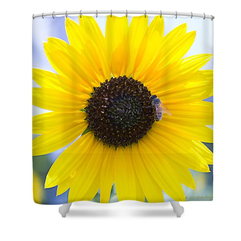 Bee Shower Curtain featuring the photograph Honey Bee On Wildflower by Walter Herrit