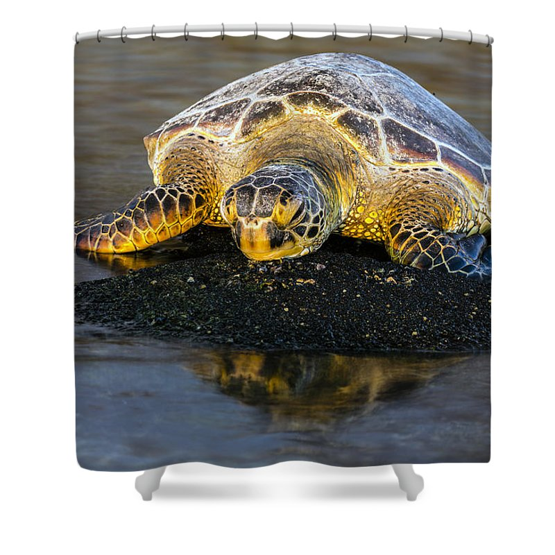 Honu Shower Curtain featuring the photograph Honu At Sunset 01 by Josh Bryant