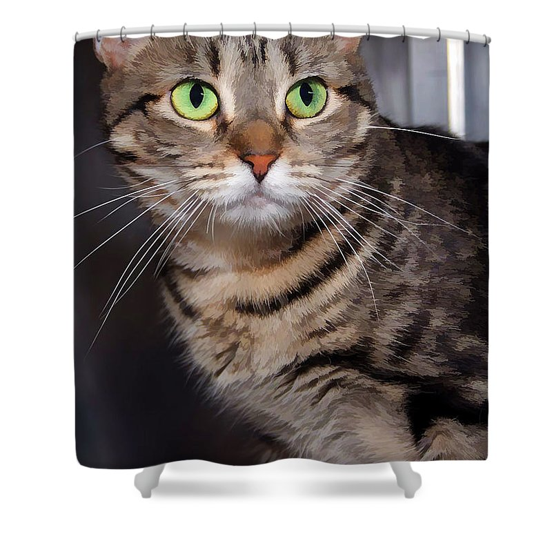Gray Tabby Shower Curtain featuring the photograph Hoping For A Home by Joyce Baldassarre
