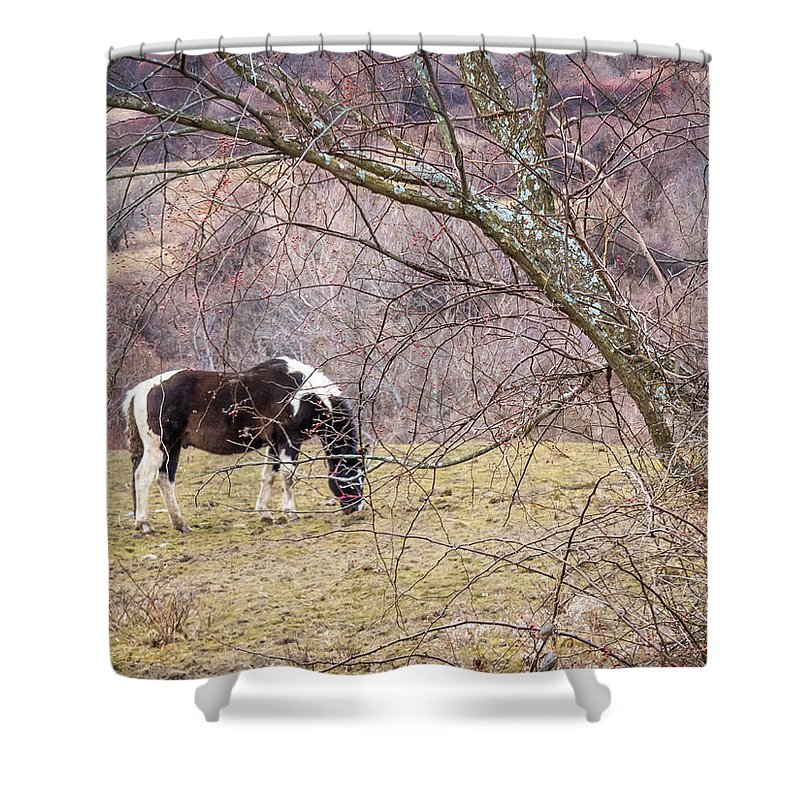 Winter Shower Curtain featuring the photograph Horse And Winter Berries by DAC Photo