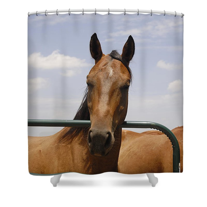 Horse Shower Curtain featuring the photograph Horse Beauty by Charles Beeler