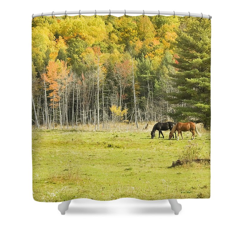 Horse Shower Curtain featuring the photograph Horse Grazing In Field Autumn Maine by Keith Webber Jr