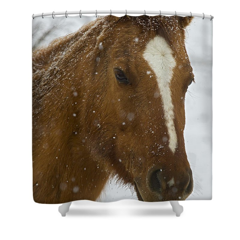 Horse Shower Curtain featuring the photograph Horse In Snow  #4651 by J L Woody Wooden