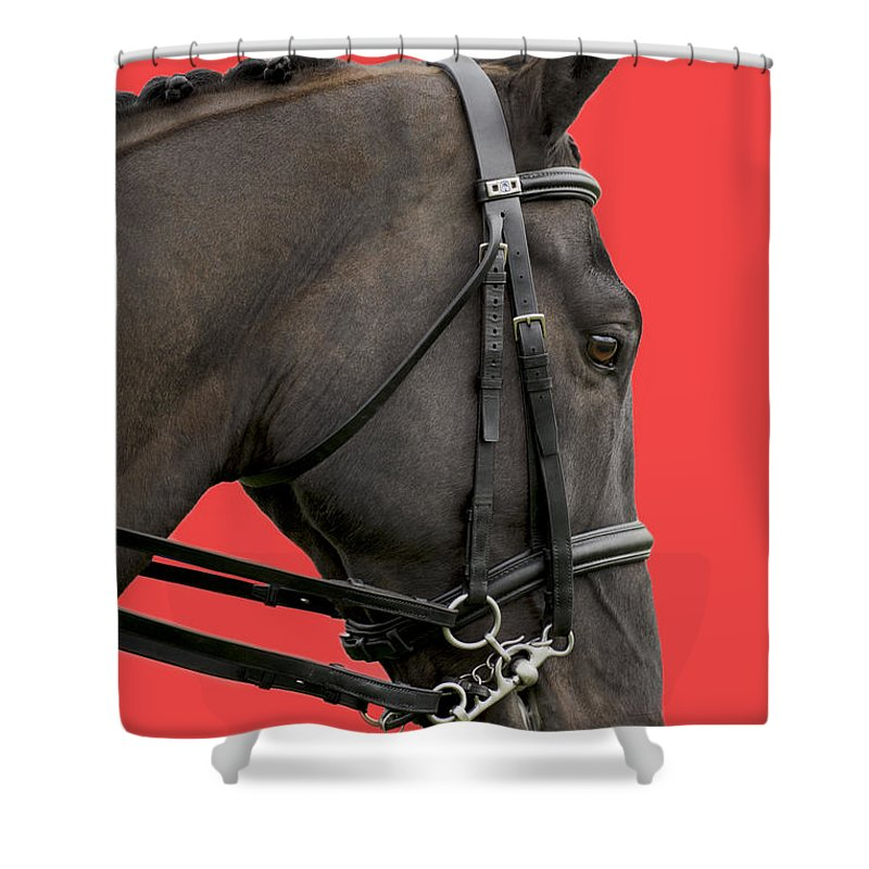 Isolated On Red Shower Curtain featuring the photograph Horse On Red by Linsey Williams