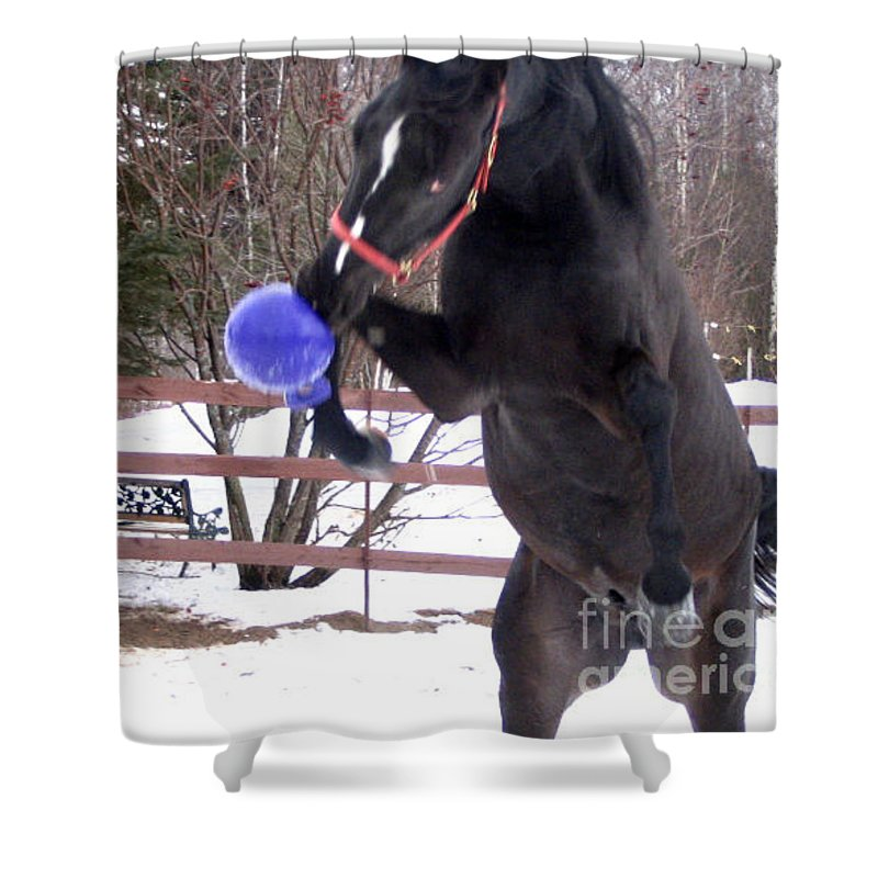 Horse Shower Curtain featuring the photograph Horse Playing Ball by Line Gagne