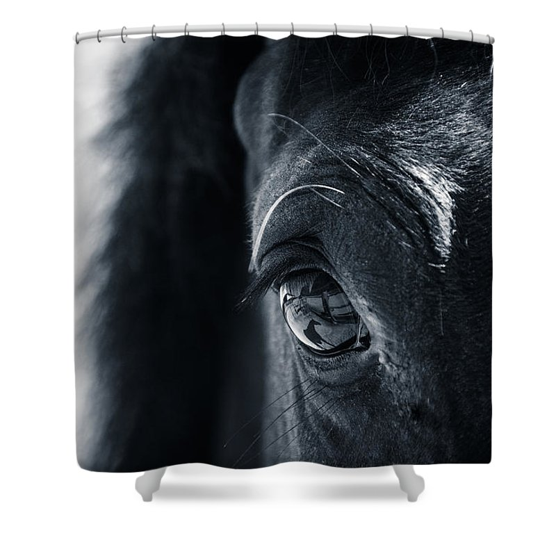 Horse Shower Curtain featuring the photograph Horse Reflection by Michele Wright