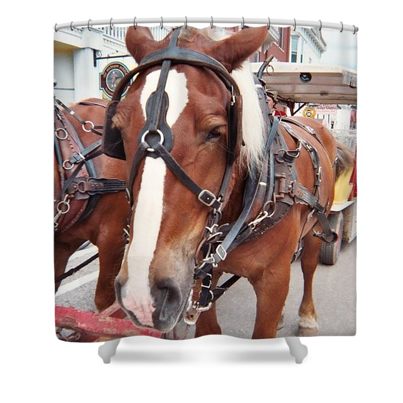Horses Shower Curtain featuring the photograph Horses by Jo Dawkins