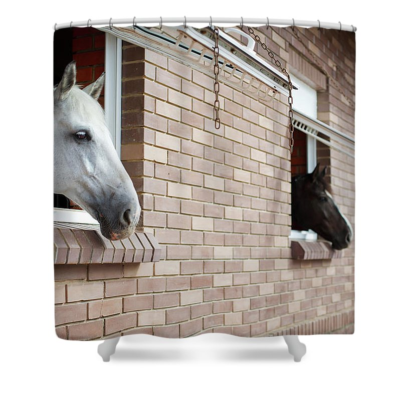 Horse Shower Curtain featuring the photograph Horses Looking From The Windows Of A by O sa