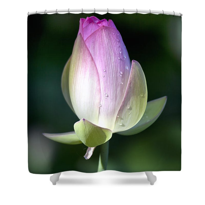 Aquatic Shower Curtain featuring the photograph Hot To Trot by Edward Kreis