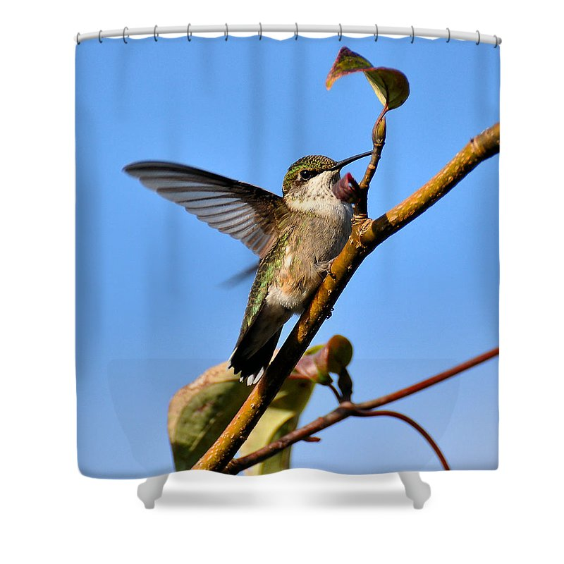 Humming Bird Shower Curtain featuring the photograph Hummer by Todd Hostetter