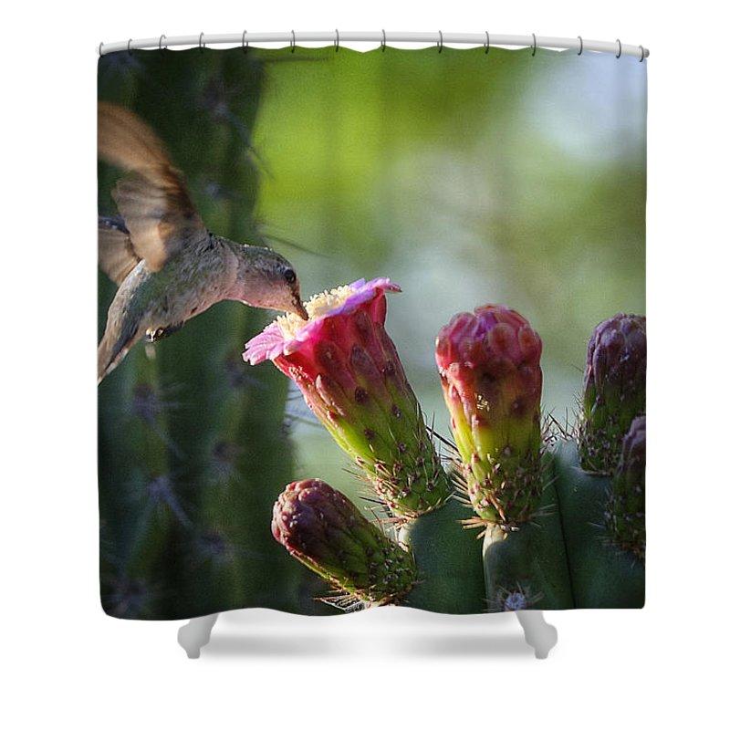 Hummingbird Shower Curtain featuring the photograph Hummingbird Breakfast Southwest Style by Saija Lehtonen