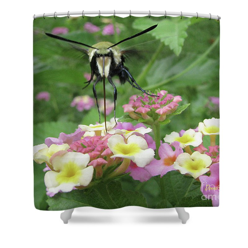 Insect Shower Curtain featuring the photograph Hummingbird Moth by Donna Brown