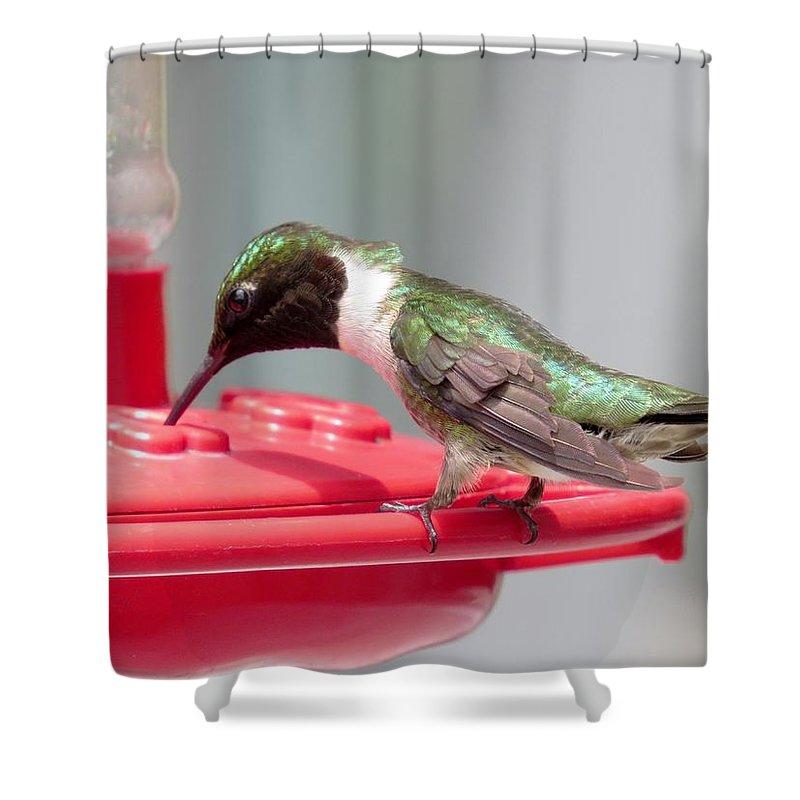 Hummingbird Shower Curtain featuring the photograph Hummingbird by Zina Stromberg