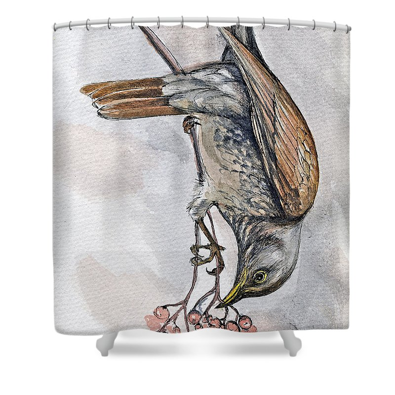 Bird Shower Curtain featuring the painting hungry Thrush 1 by Angel Ciesniarska