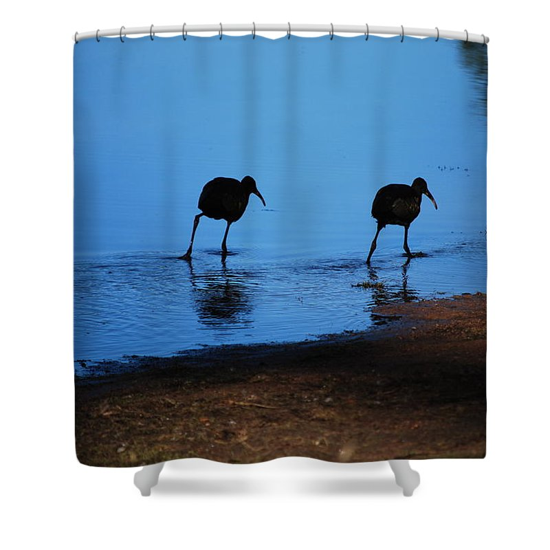 Water Shower Curtain featuring the photograph Hunting by Bradley Bennett