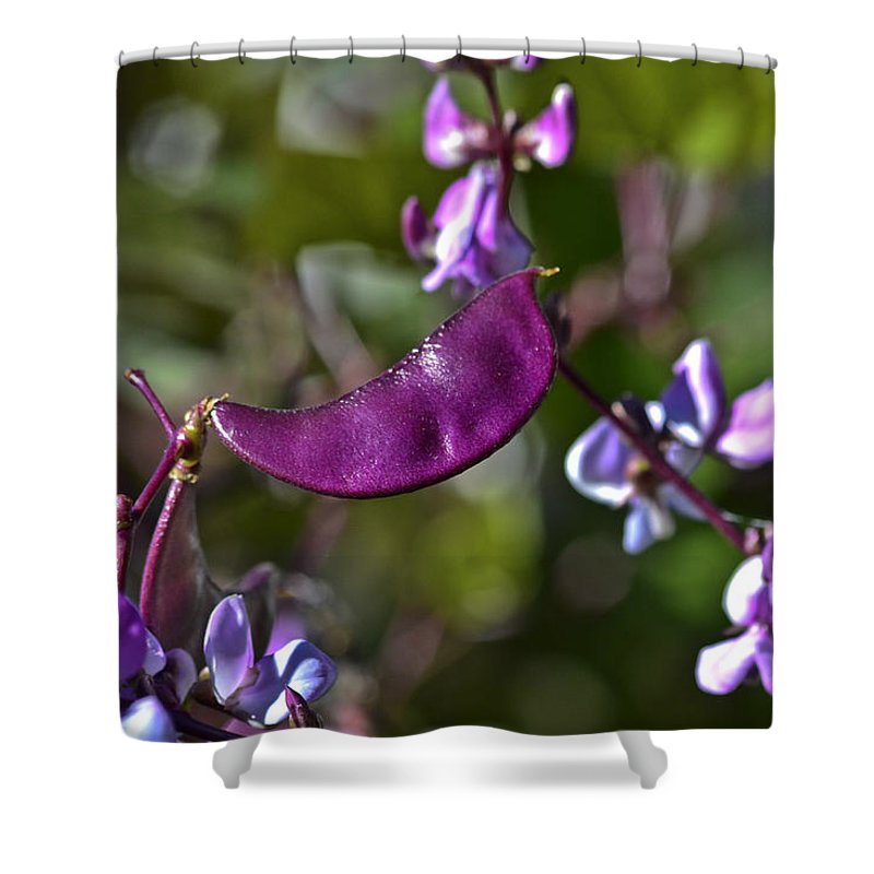 Hyacinth Shower Curtain featuring the photograph Hyacinth Bean by Allen Sheffield