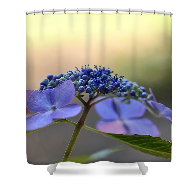 Flora Shower Curtain featuring the photograph Hydrangea Umbrella by Larry Bishop