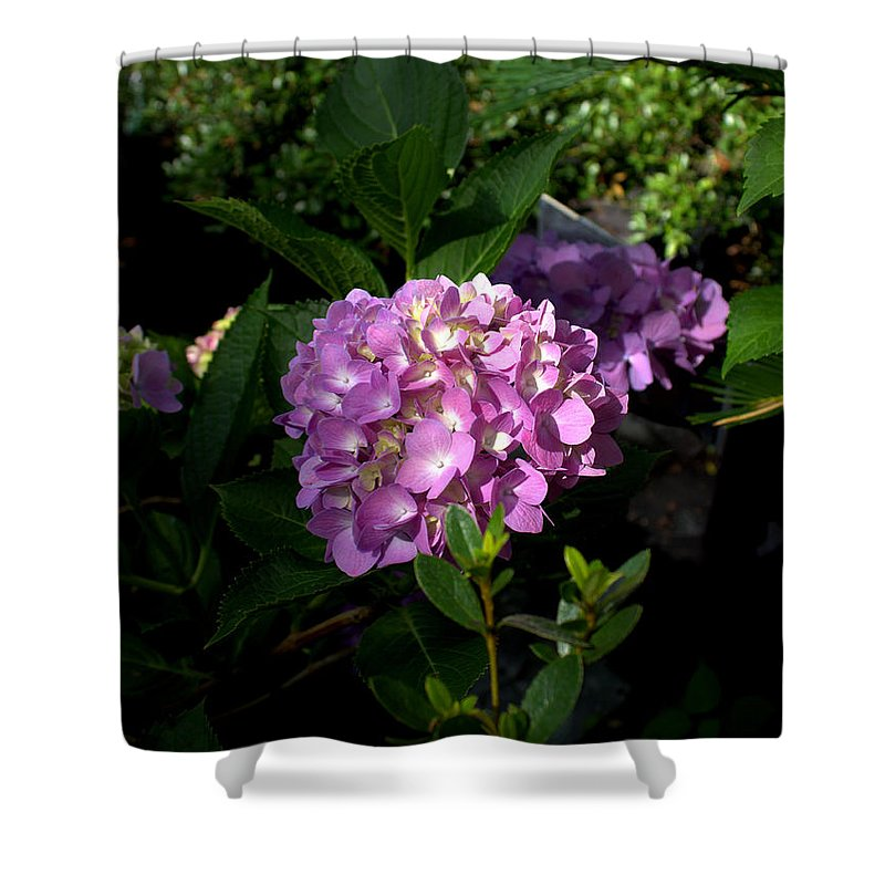 Hydrangeas Shower Curtain featuring the photograph Hydrangeas V by Beth Vincent