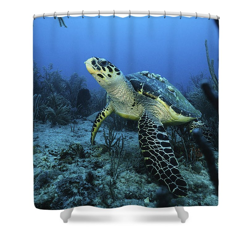 Angle Shower Curtain featuring the photograph I Am A Proud Hawksbill Turtle by Sandra Edwards