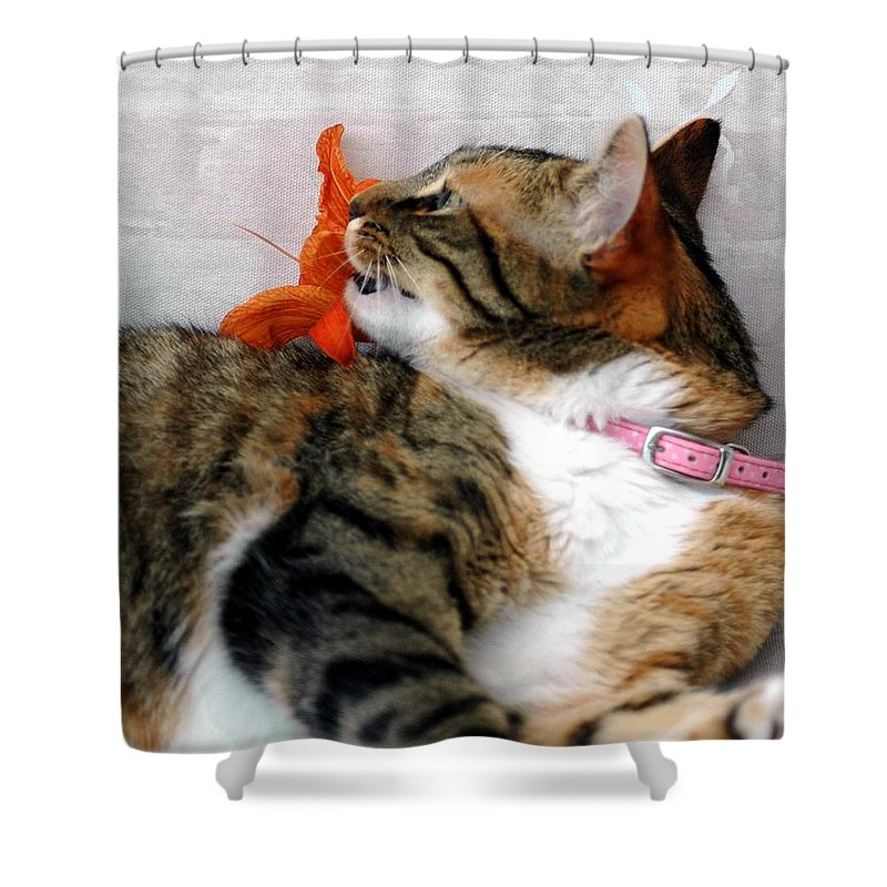Cat Shower Curtain featuring the photograph I Am Done by Kathleen Struckle