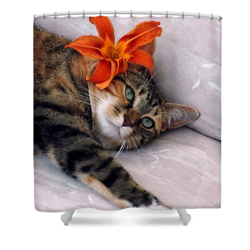 Cat Shower Curtain featuring the photograph I Am Tired by Kathleen Struckle