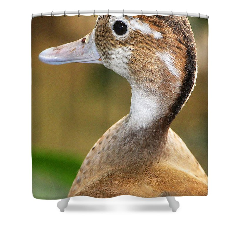 Care Shower Curtain featuring the photograph I Do Care by Munir Alawi