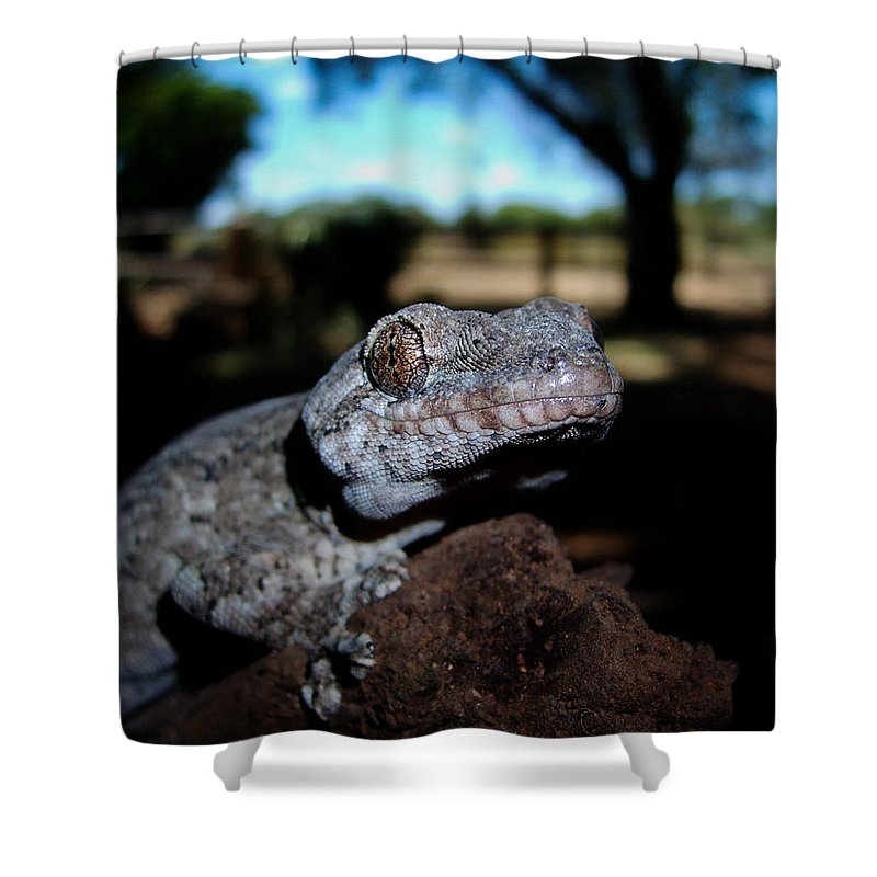 Gecko Shower Curtain featuring the photograph I See You by Tracey Beer