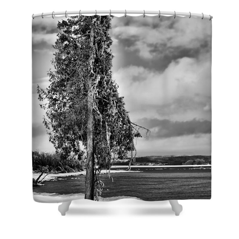 Ice Shower Curtain featuring the photograph Ice Coated Tree by Louise Heusinkveld