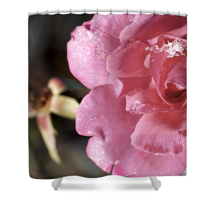 Rose Macro Shower Curtain featuring the photograph Ice Rose by Jason Politte