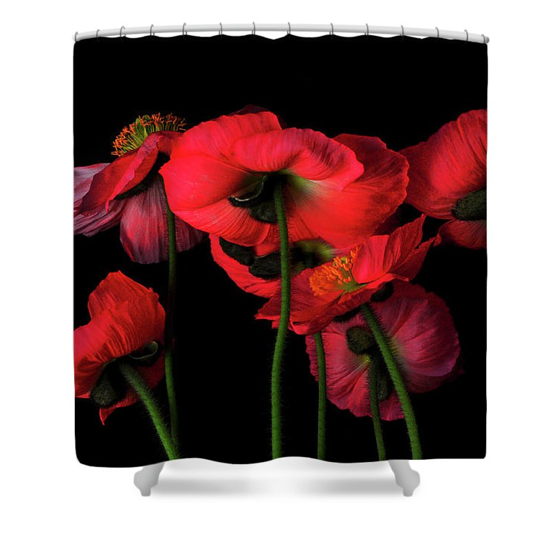 California Shower Curtain featuring the photograph Icelandic Poppies - The View From Down by Bill Gracey