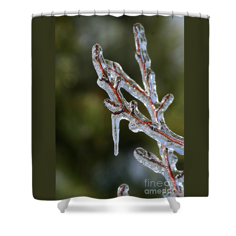 Ice Shower Curtain featuring the photograph Icy Branch-7498 by Gary Gingrich Galleries