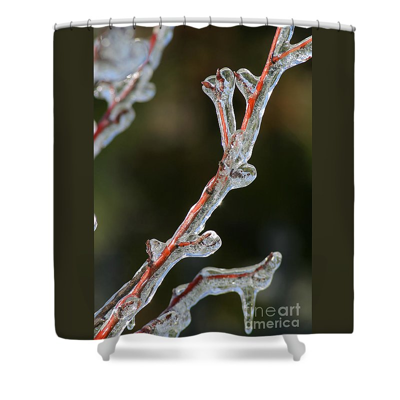 Ice Shower Curtain featuring the photograph Icy Branch-7512 by Gary Gingrich Galleries
