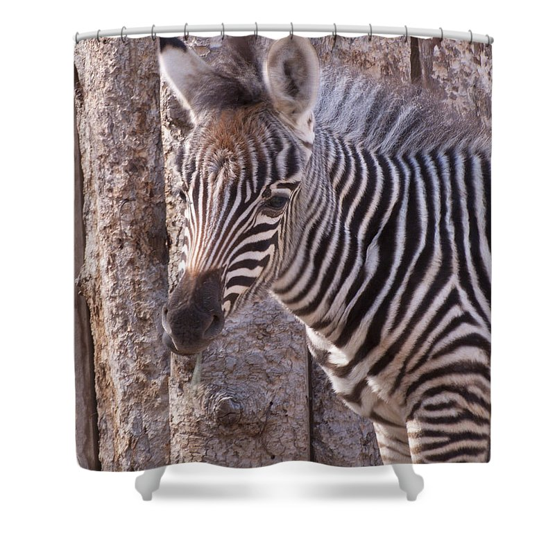 Idaho Falls Shower Curtain featuring the photograph Idaho Falls - Tautphaus Park Zoo by Image Takers Photography LLC