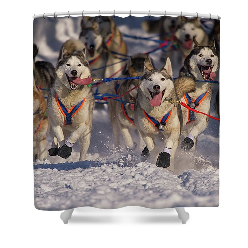 Snow Shower Curtain featuring the photograph Iditarod Huskies by Alaska Photography