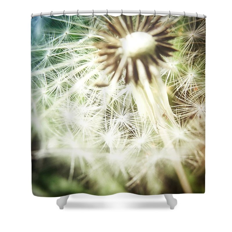 Dandelion Shower Curtain featuring the photograph Illuminated Wishes by Marianna Mills