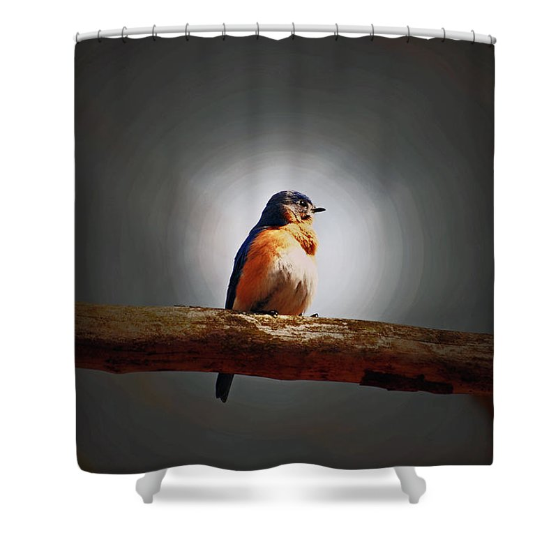 Bluebird Shower Curtain featuring the photograph I'm A Bluebird And I'm Beautiful by Lori Tambakis