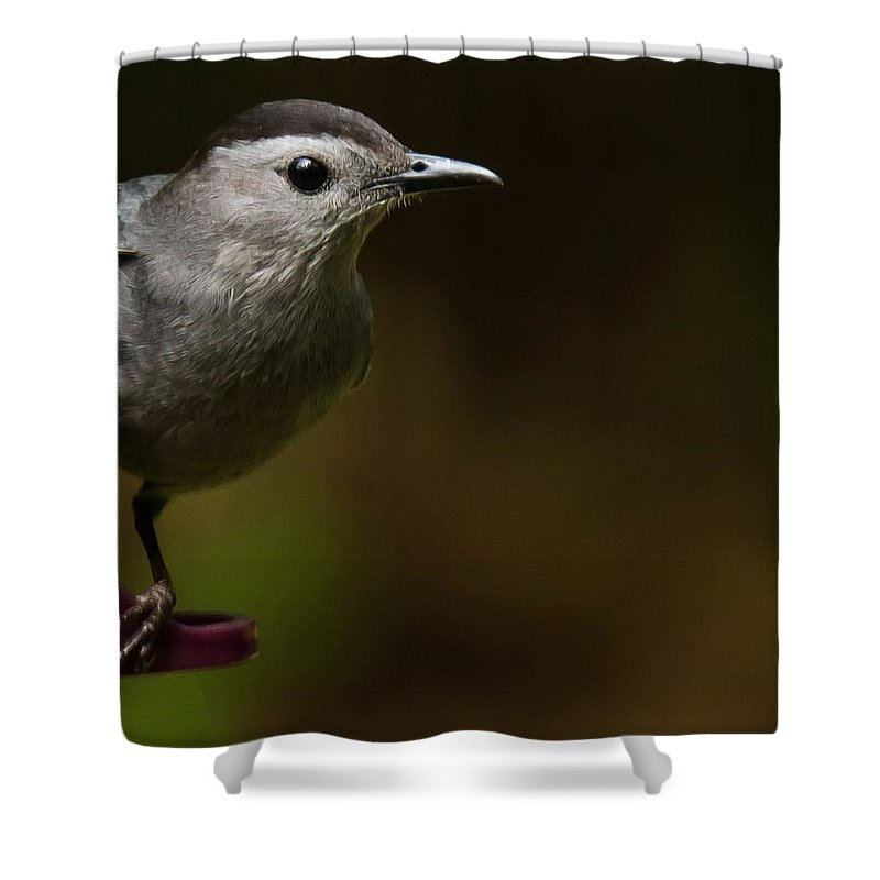 Gray Catbird Shower Curtain featuring the photograph I'm A Cat Bird And I Sound Like One Too by Robert L Jackson