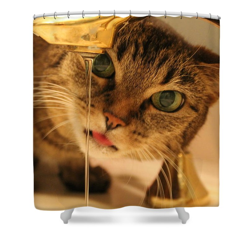 Cat Shower Curtain featuring the photograph I'm Going In by Catie Canetti