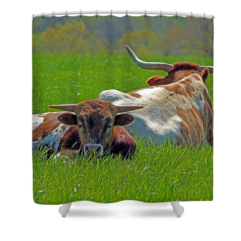 Longhorn Shower Curtain featuring the photograph I'm Just A Baby by Lynn Sprowl