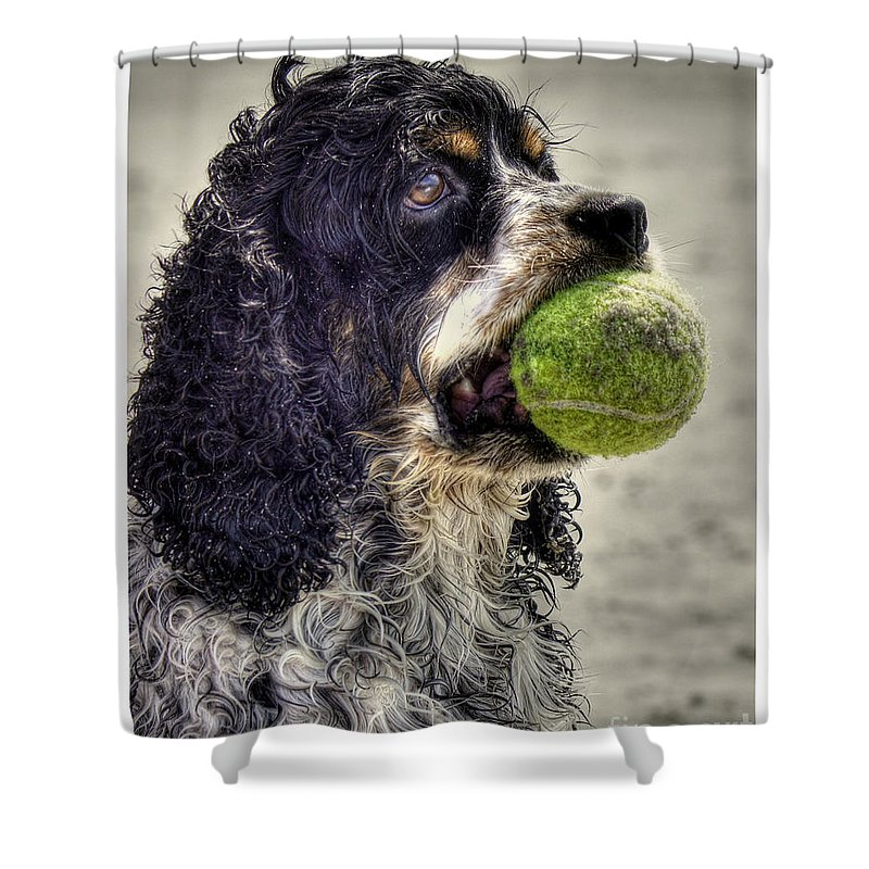 Cocker Spaniel Shower Curtain featuring the photograph I'm Ready To Play by Benanne Stiens